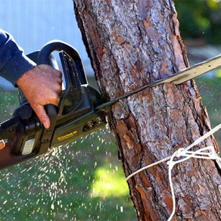 emergency tree service ct